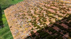 Roof - Viaio -Linda Sgoluppi April 2015