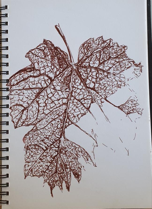 Leaf skeleton - pen on sketchbook - Linda Sgoluppi