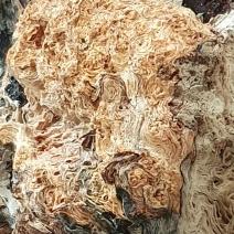 Close up of driftwood log
